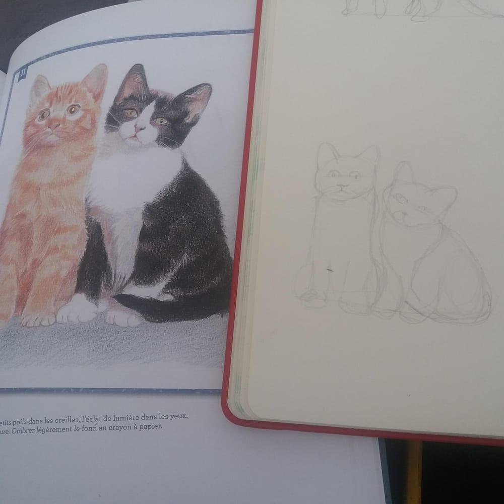 Animal Study - Drawing cats #skillshareclass - image 5 - student project