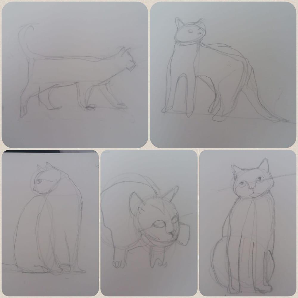 Animal Study - Drawing cats #skillshareclass - image 1 - student project