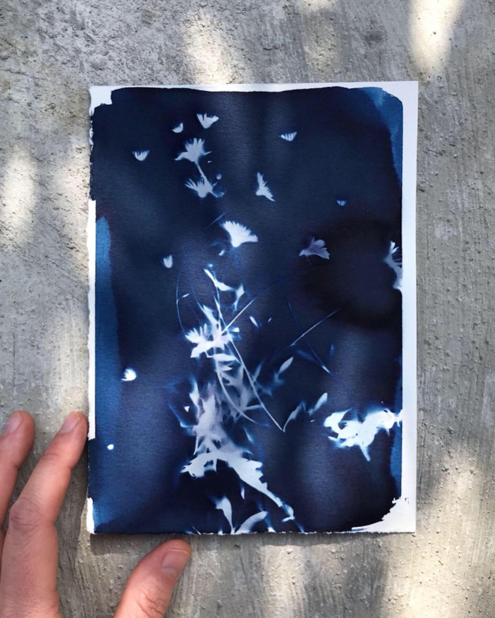 My first cyanotypes - image 1 - student project