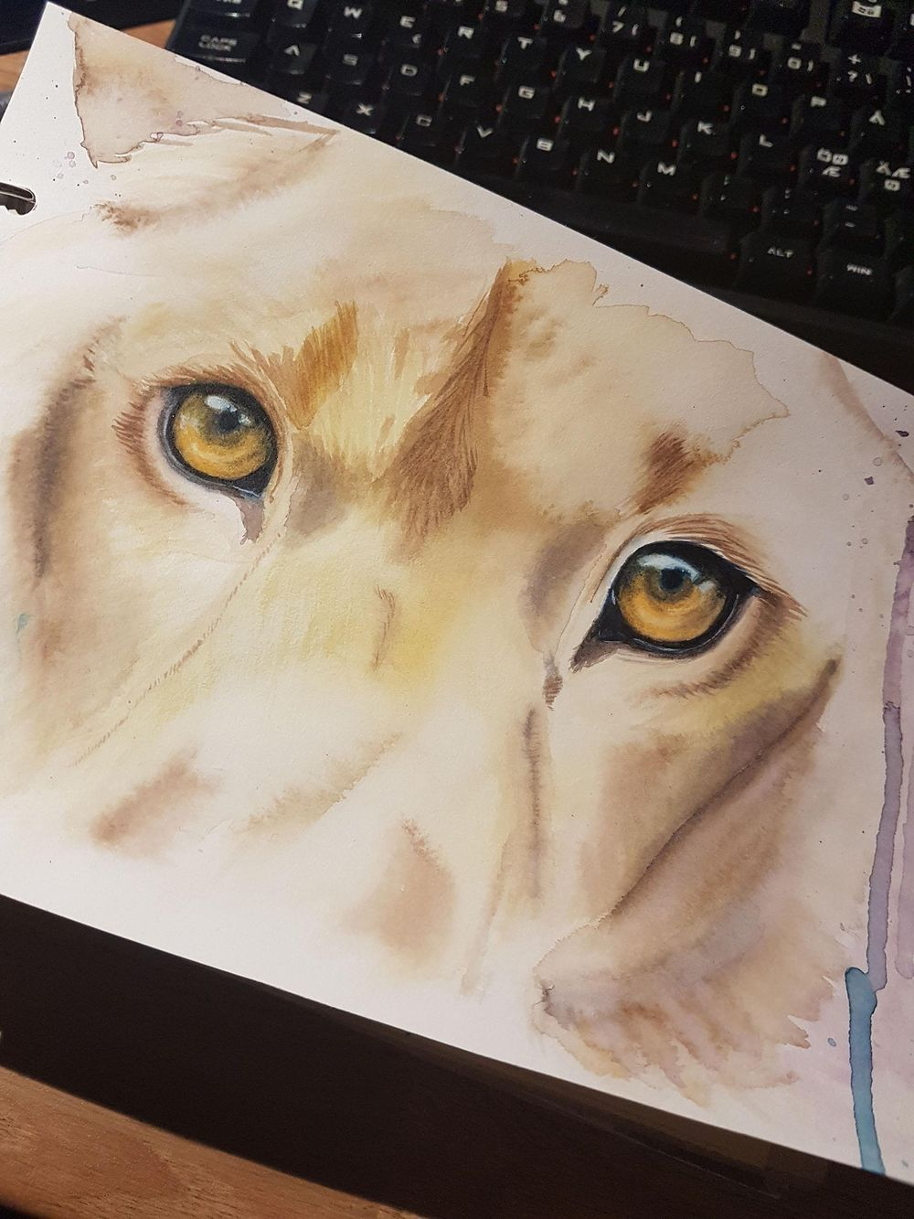 Lion eyes - image 1 - student project