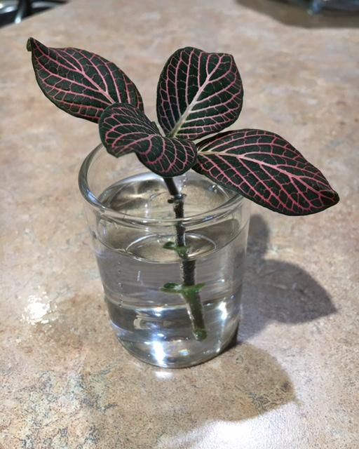 Day 1: Blood Plant clipping - image 1 - student project