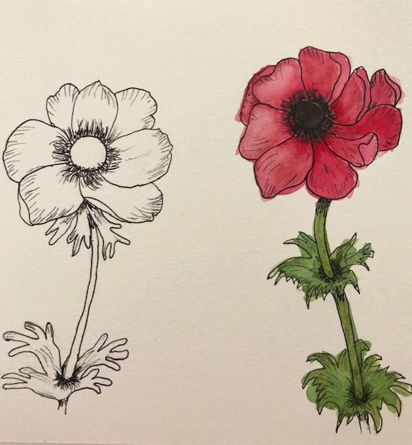 Anemone - image 1 - student project