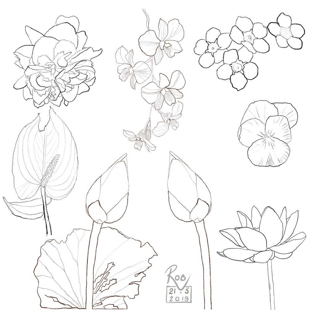 Ink and Watercolour Botanical projects - image 2 - student project