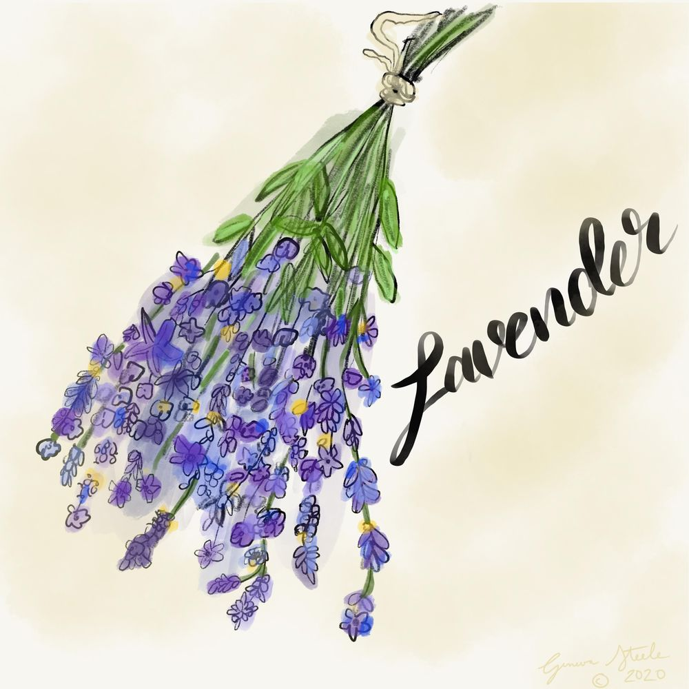 Lavender - image 1 - student project