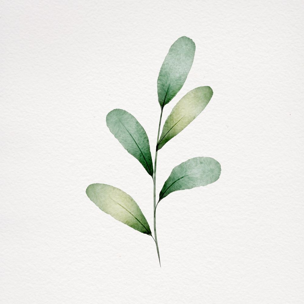 Watercolor botanicals - image 3 - student project