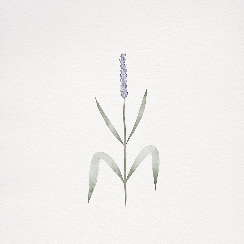 Watercolor botanicals - image 6 - student project