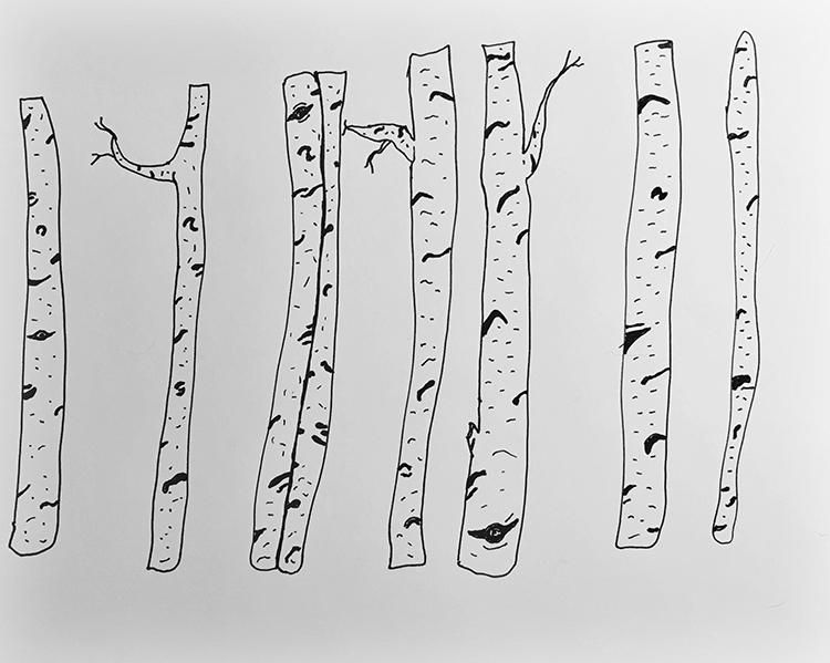 Birch Trees - image 3 - student project