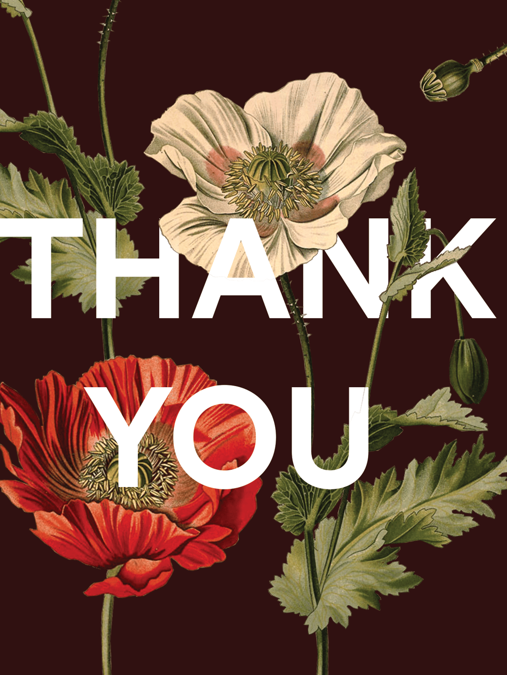 """""""Thank You"""" Poster - image 1 - student project"""