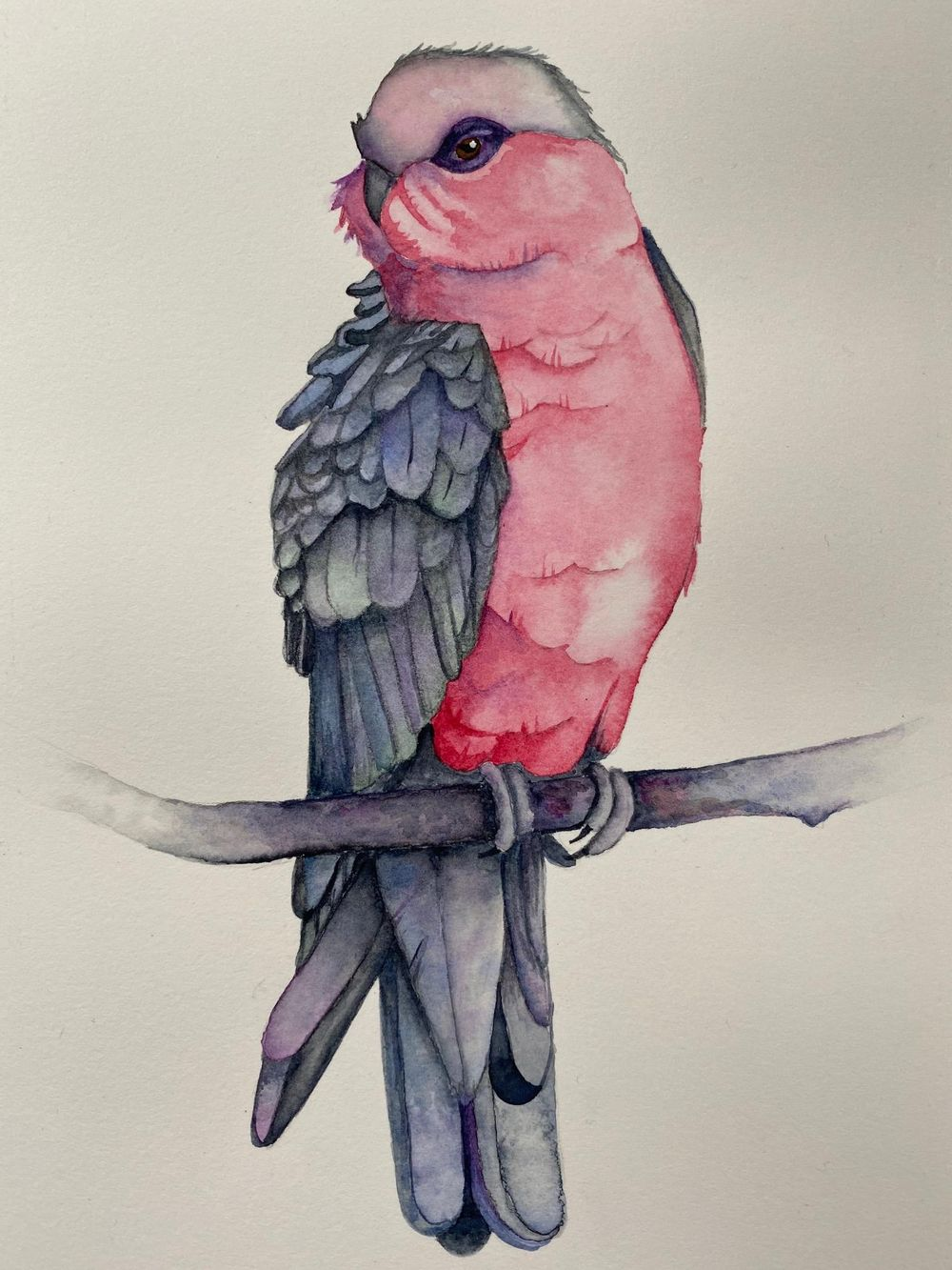 My Galah - image 1 - student project