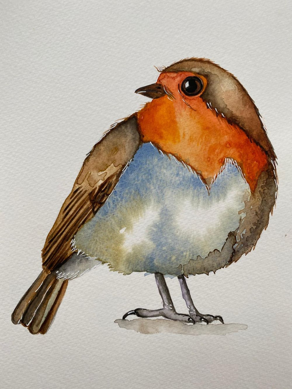 Robin - image 2 - student project