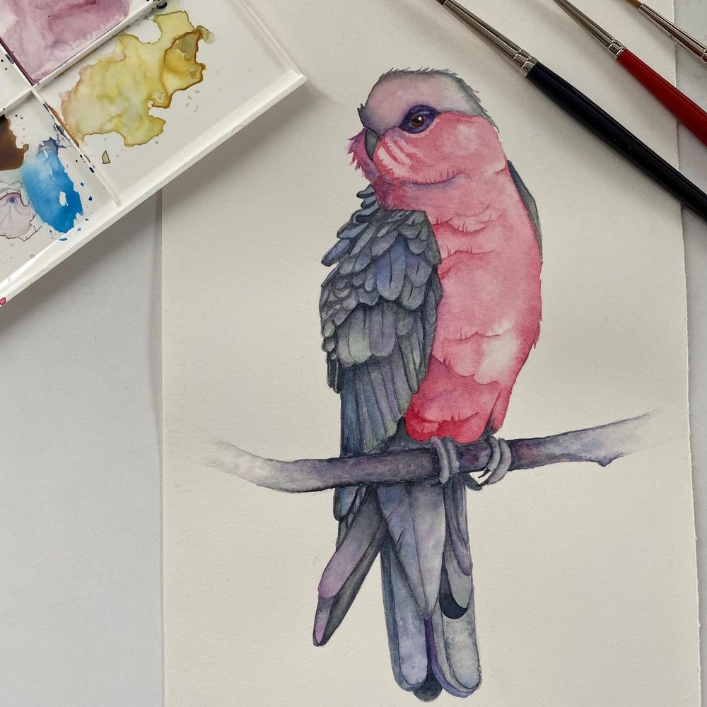 My Galah - image 2 - student project