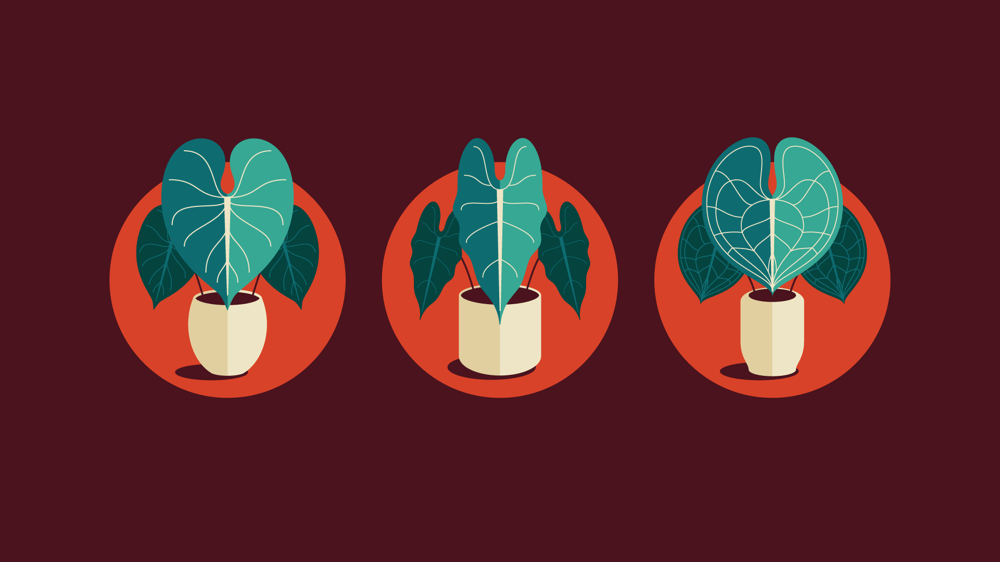 Plant Icon Set - image 6 - student project