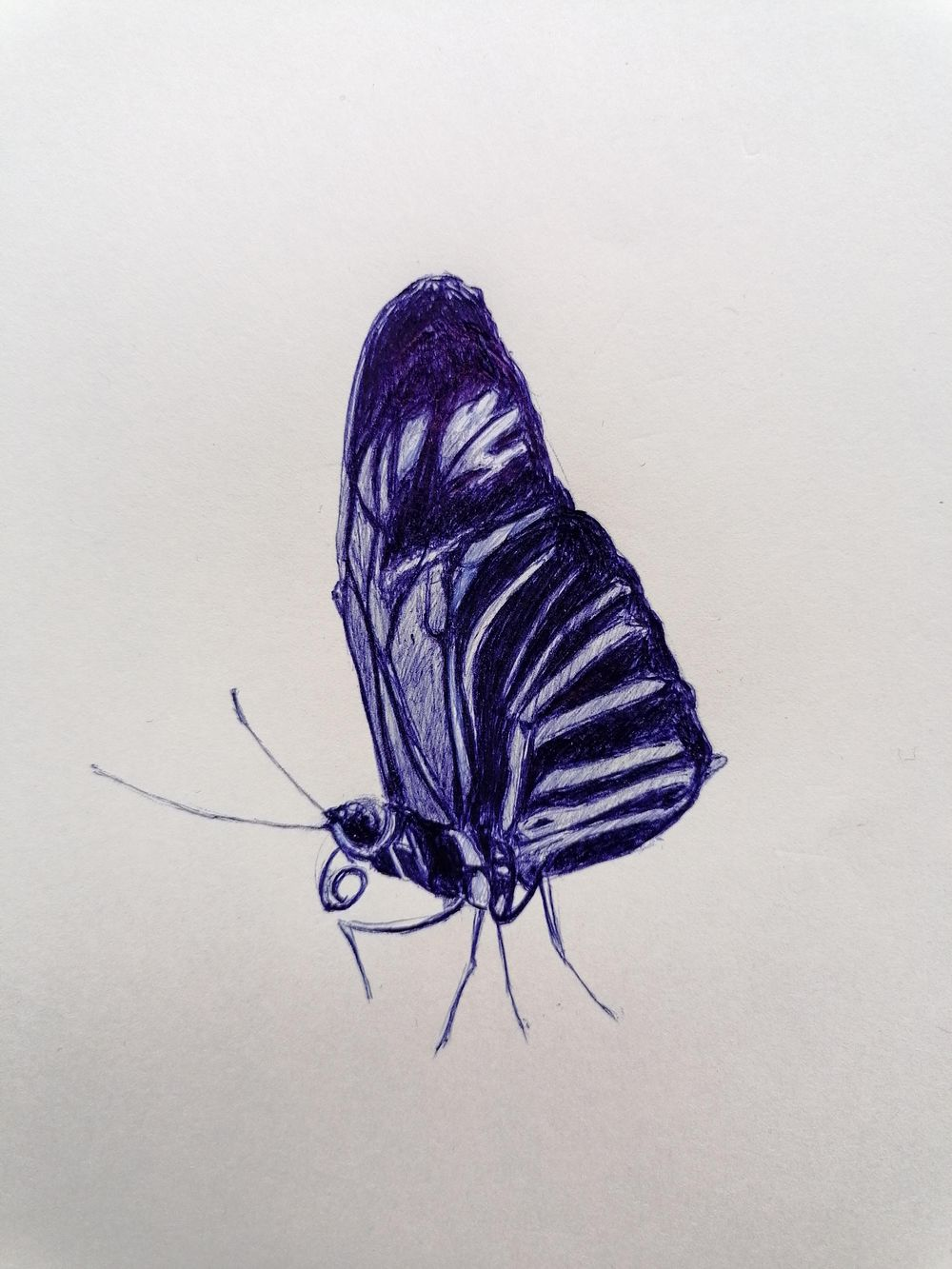 Ballpoint Drawing butterfly - image 1 - student project