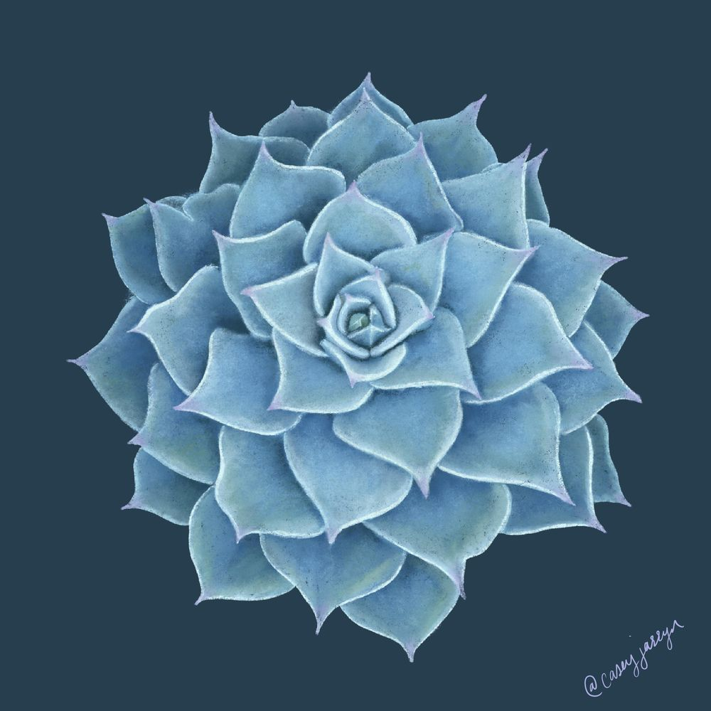 Succulents from my garden... - image 1 - student project