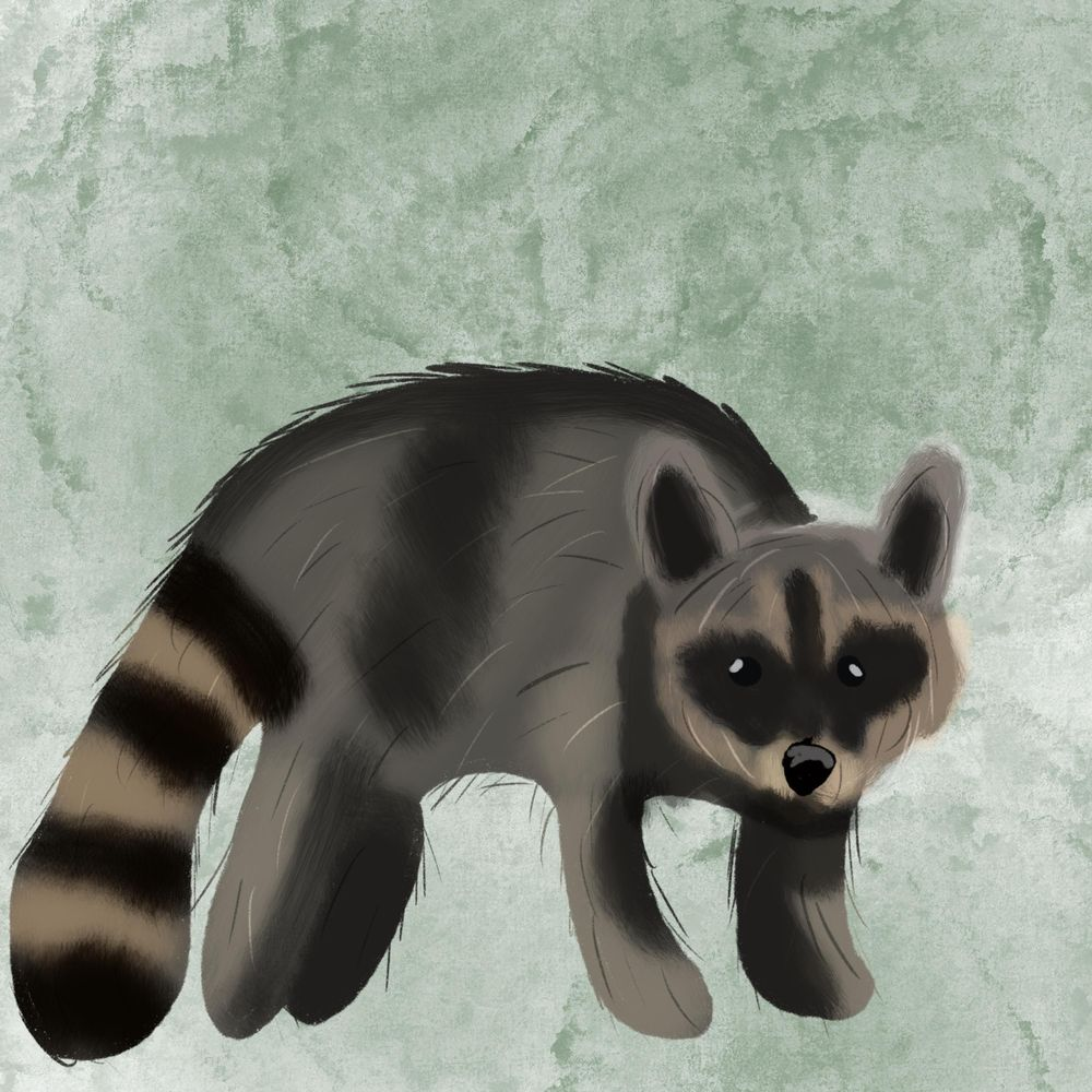 Fox and Raccoon - image 1 - student project
