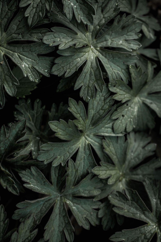Dark Botanicals - image 6 - student project