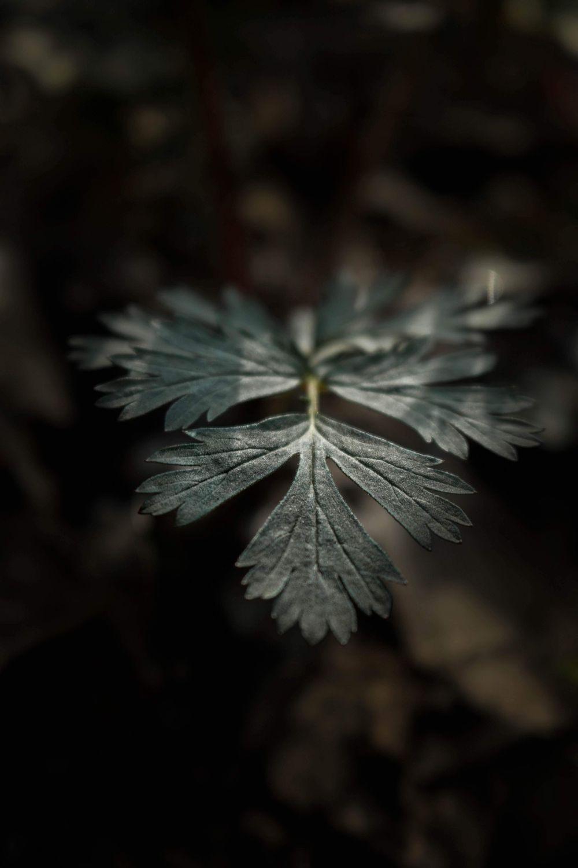 Dark Botanicals - image 5 - student project