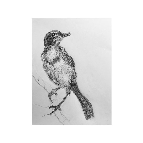 Basic Skills/Getting Started with Drawing - image 1 - student project