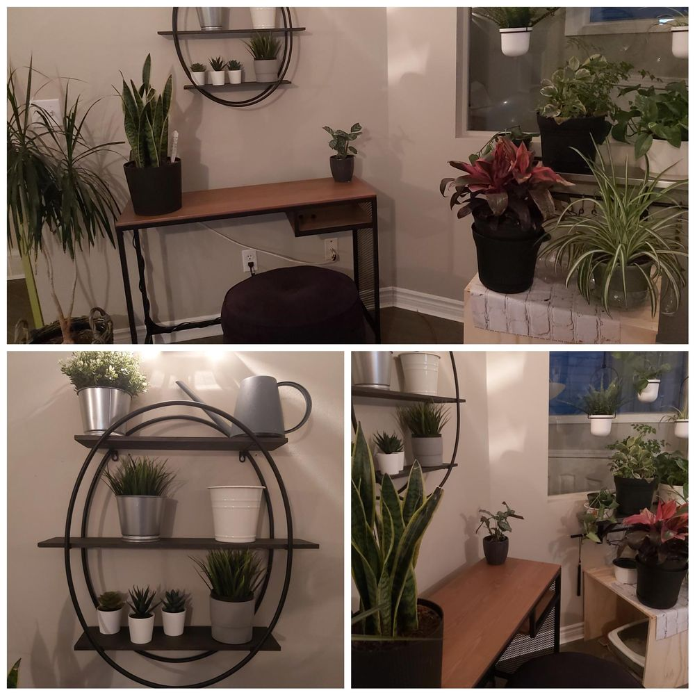 My new plant space - UPDATE :-) - image 1 - student project