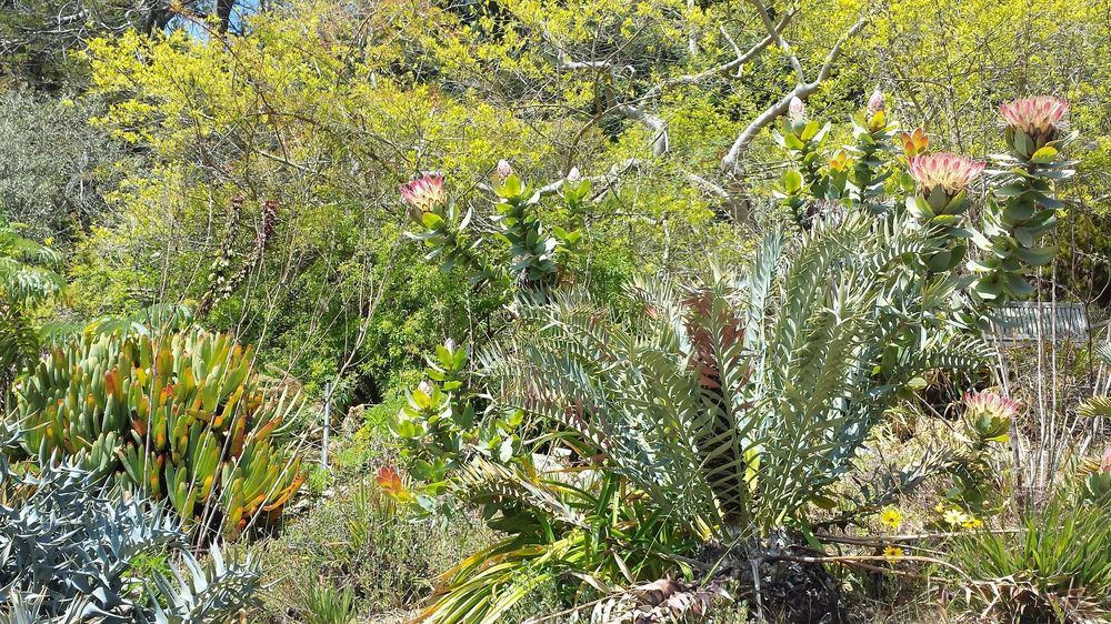Plants of Southern Africa - image 2 - student project