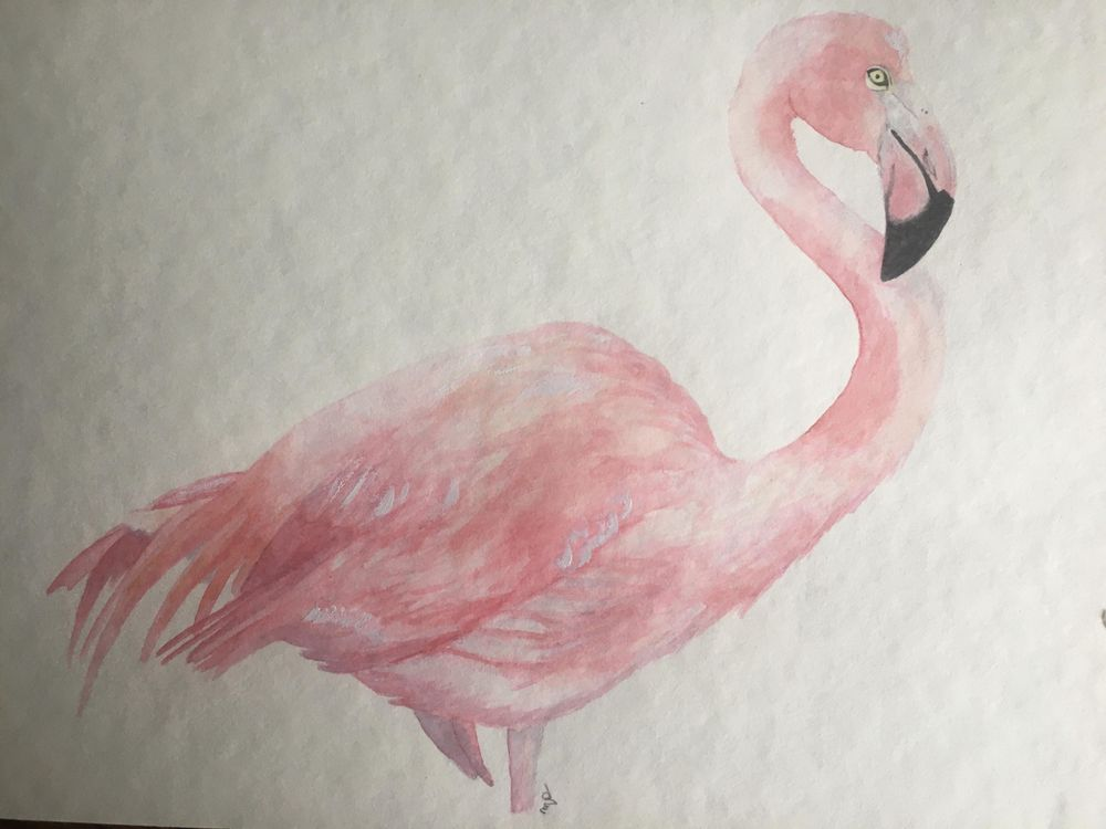 fox, flamingo, snake - image 1 - student project