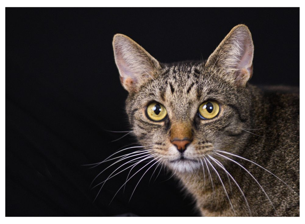 Cat Photography - image 2 - student project
