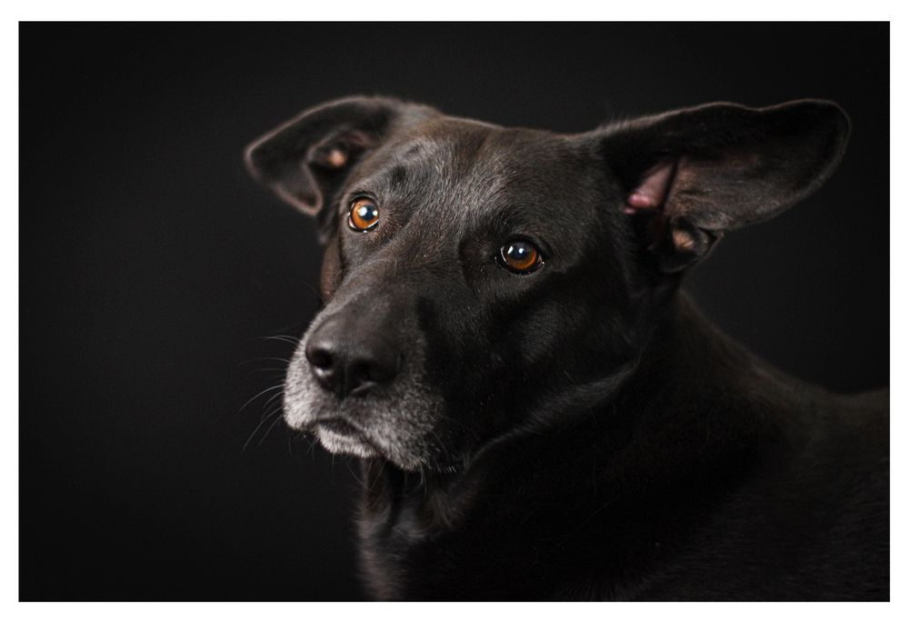 Cats and Dogs - image 6 - student project