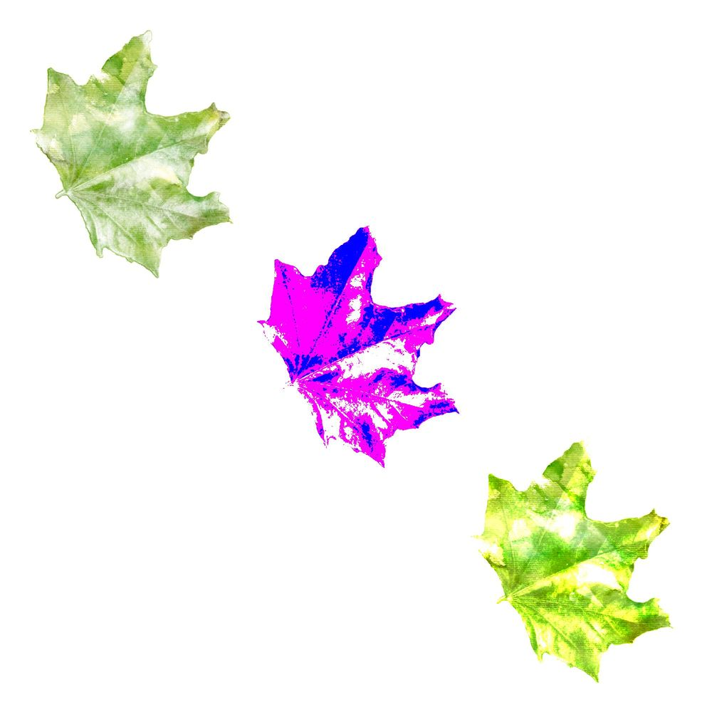 Watercolour Leaf - image 1 - student project