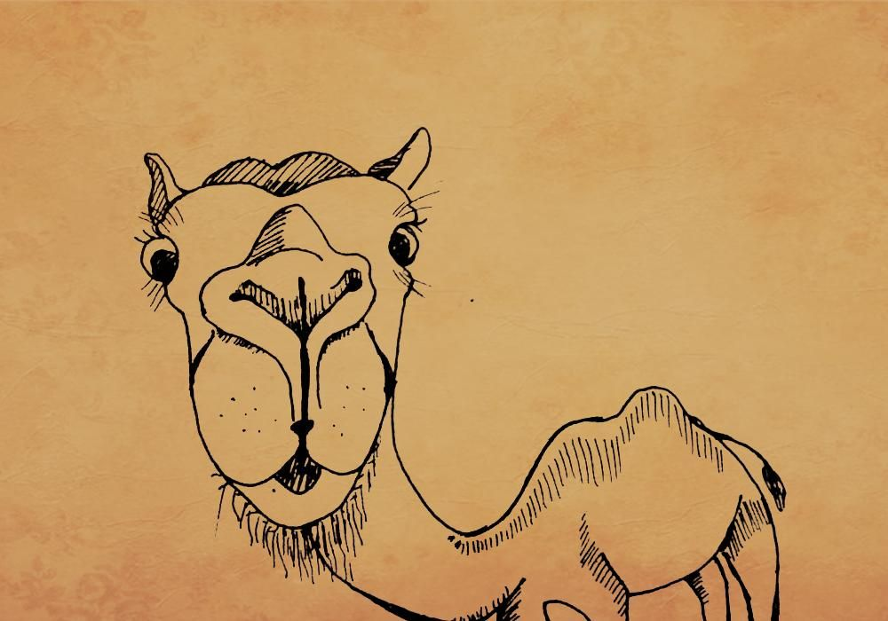 camel cuter characters - image 1 - student project