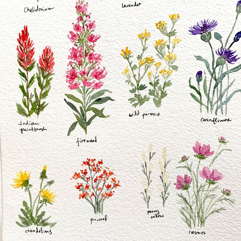 Pretty Little Wildflowers - image 3 - student project