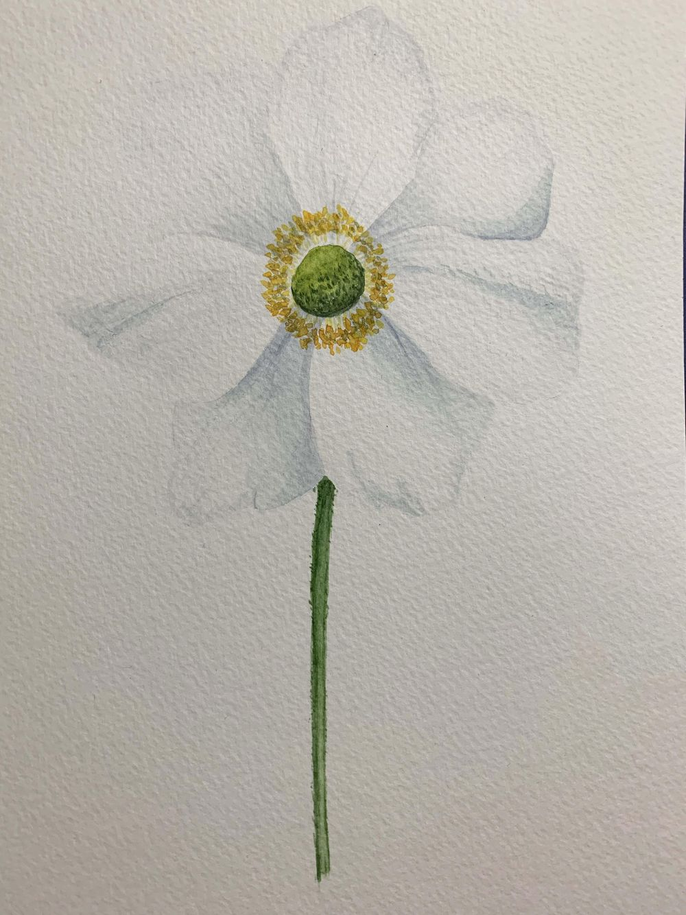 Snowdrops & Anemone - image 1 - student project