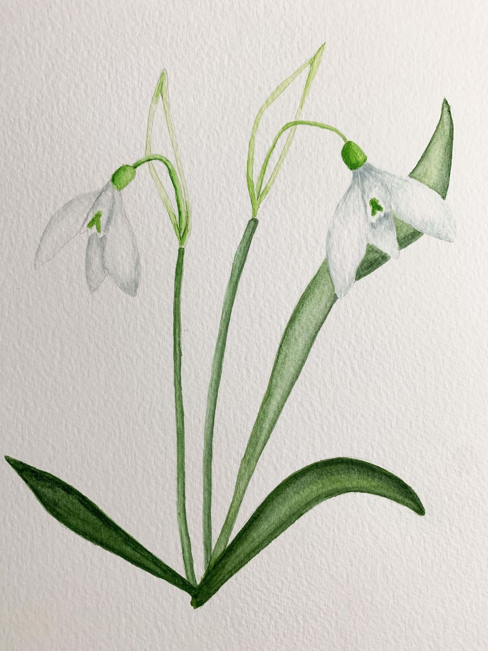 Snowdrops & Anemone - image 2 - student project