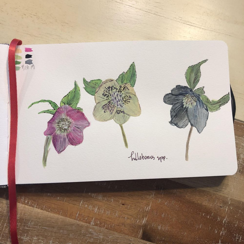 Trio of Hellebores - image 1 - student project