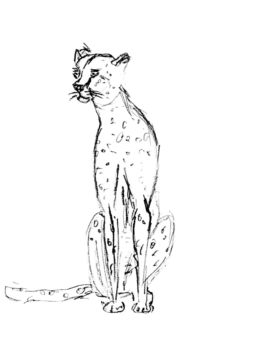 Quick Cheetah sketch - image 1 - student project
