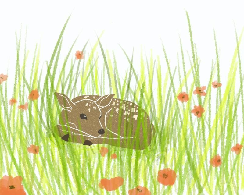 Resting Fawn - image 1 - student project