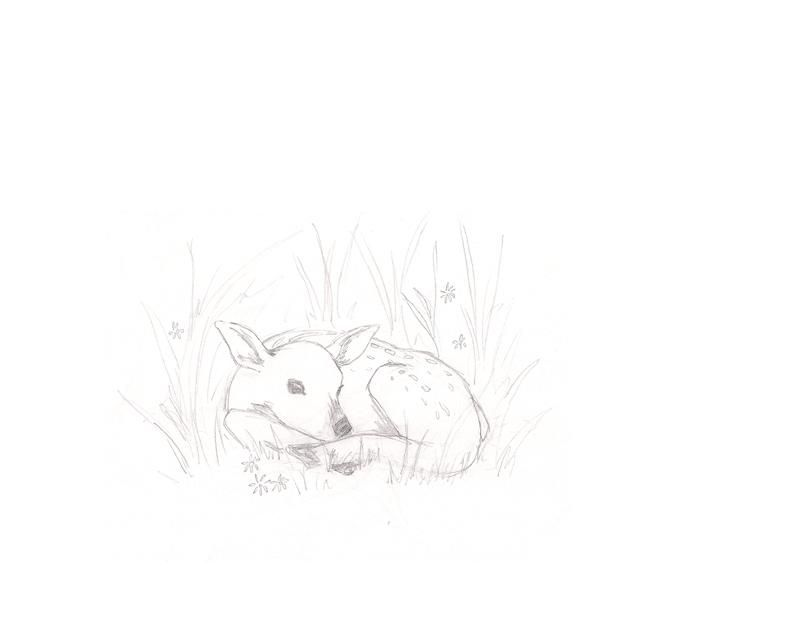 Resting Fawn - image 3 - student project