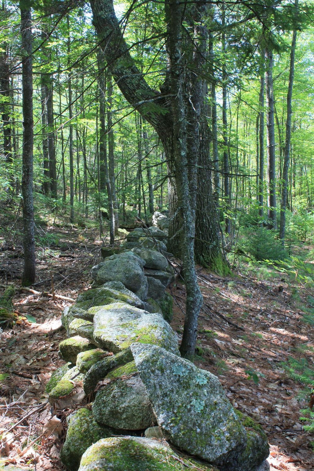 Stone Wall - image 1 - student project