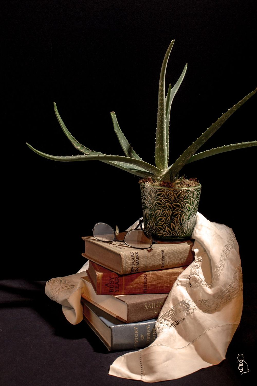 Aloe, et al - image 3 - student project
