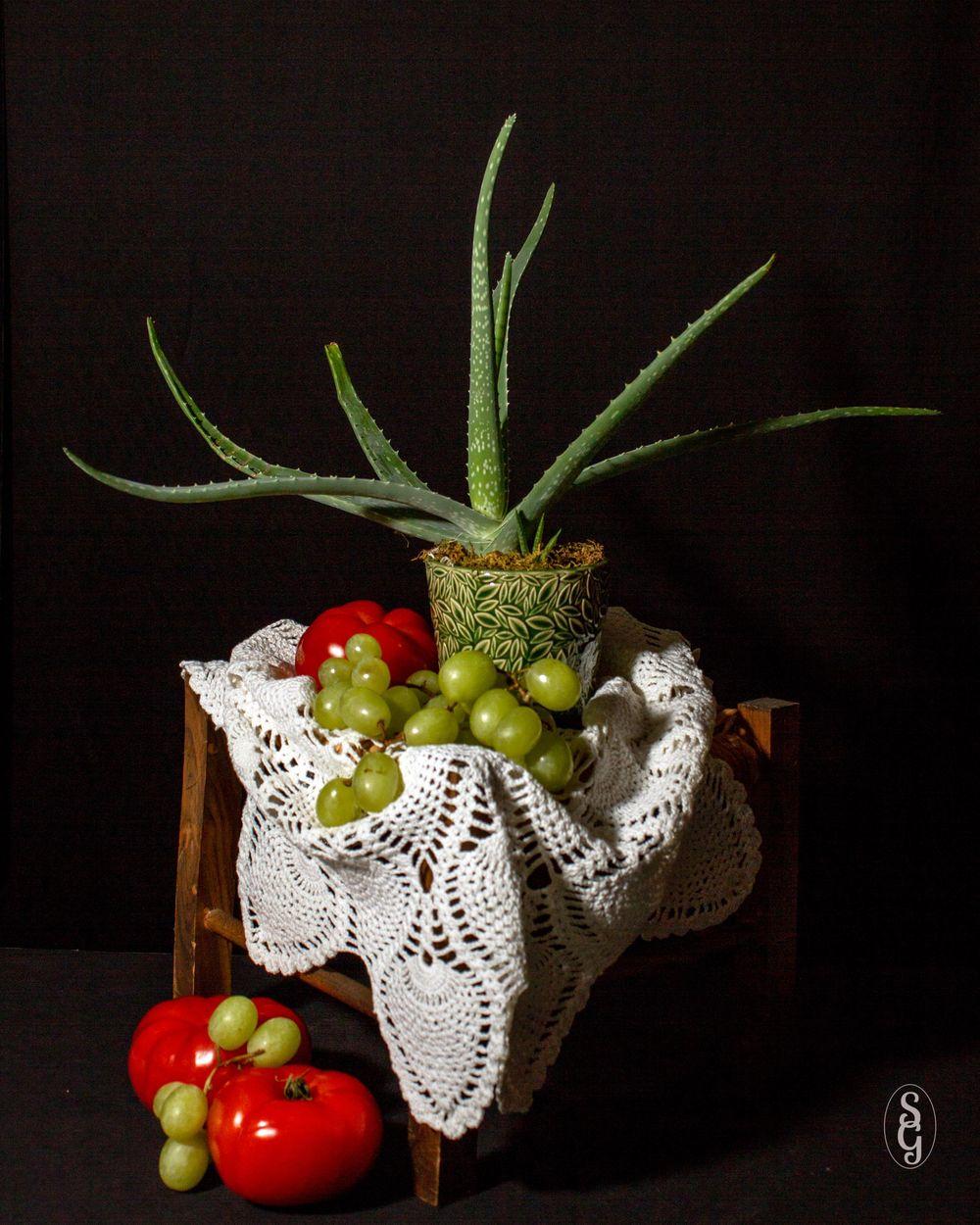 Aloe, et al - image 1 - student project