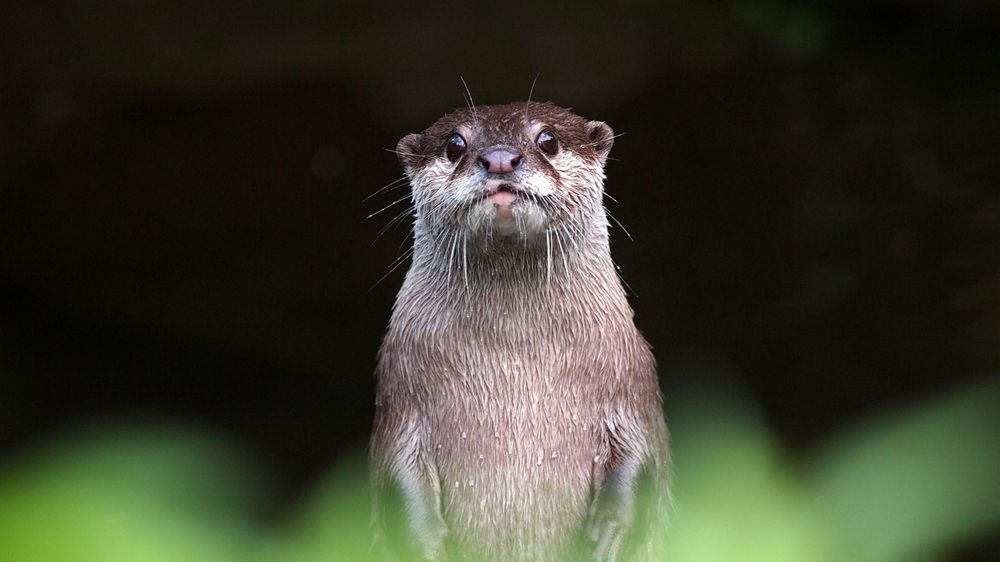 Otter - image 2 - student project