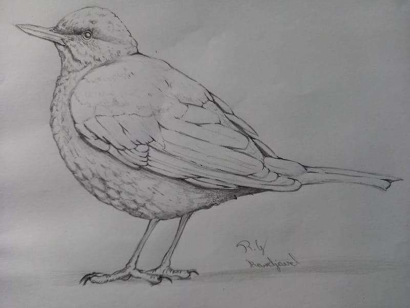 Gabrielle Brickey Workshop Birb Sketch