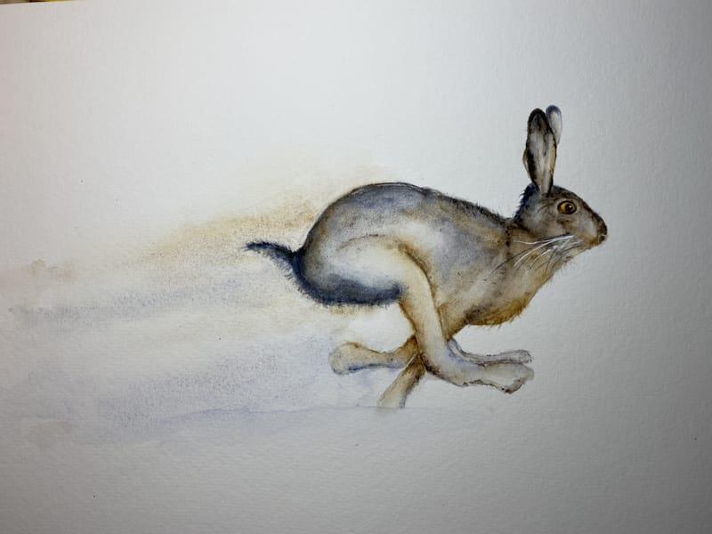 Galloping Hare