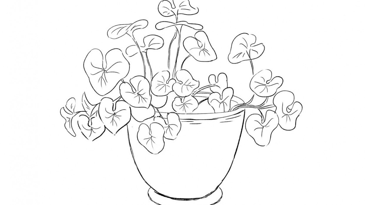 A Potted Plant - student project