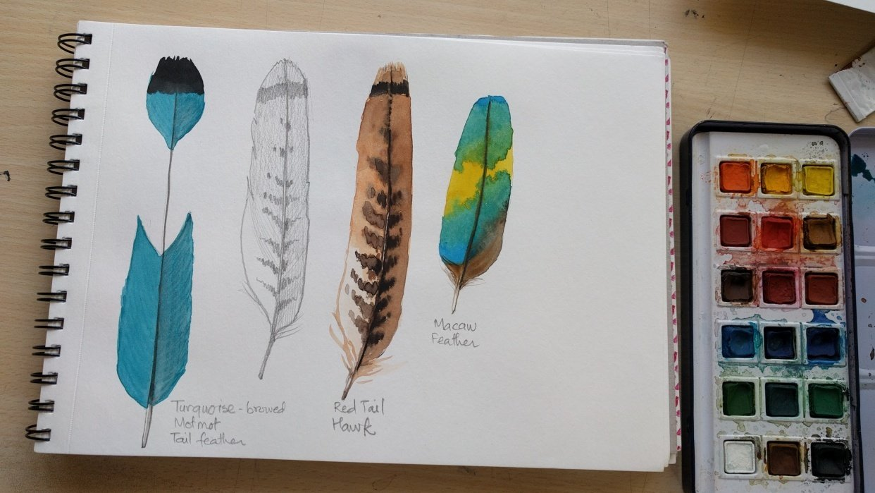 Feathers! - student project
