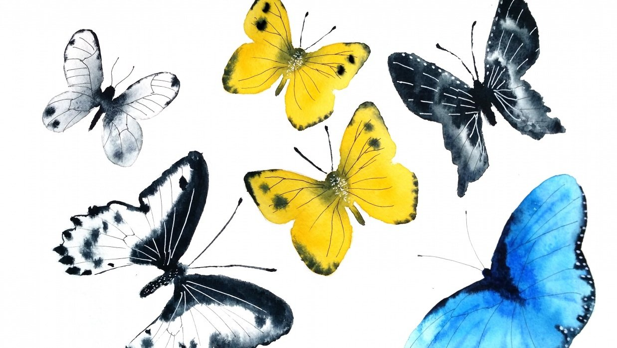 Butterflies with Olga - student project