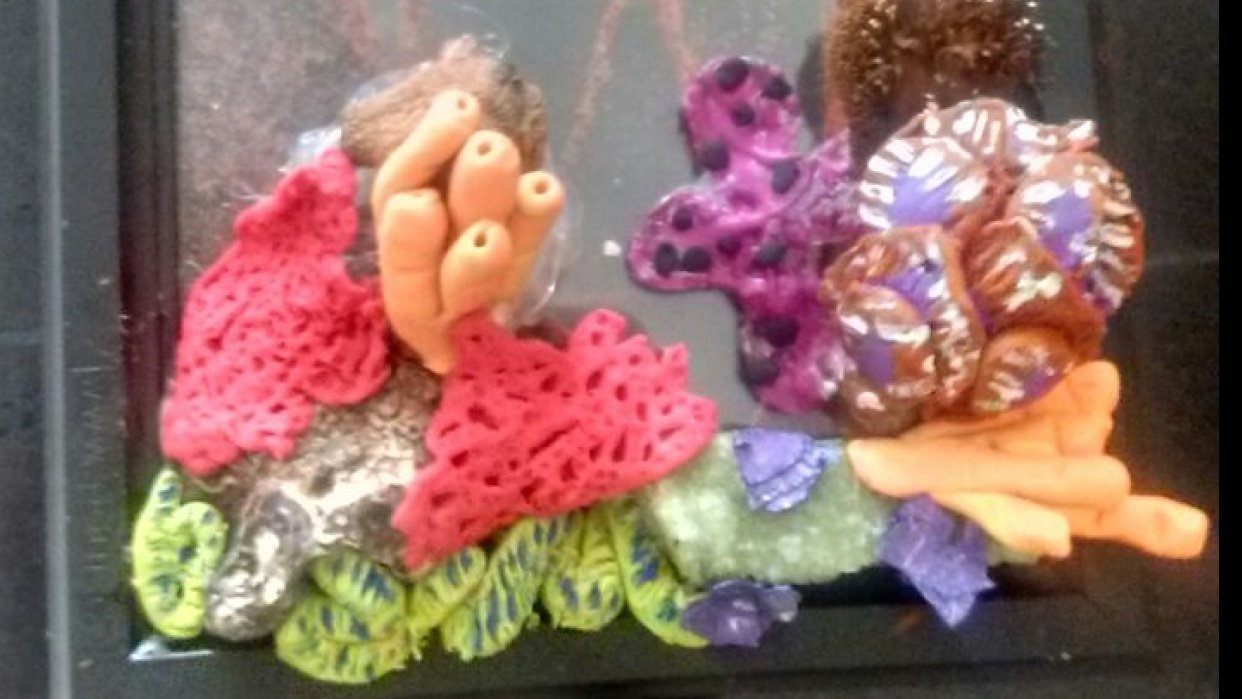 Coral Reef Ecosystem based on Stefanie's lesson - student project