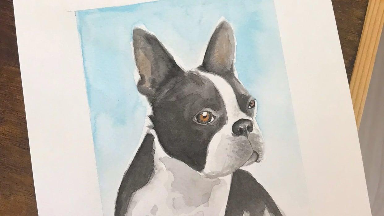 Boston Terrier Portrait - student project