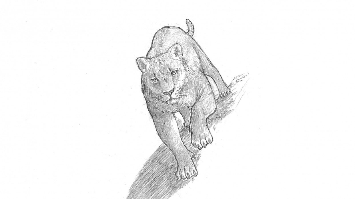 Project: Animal Drawing - student project