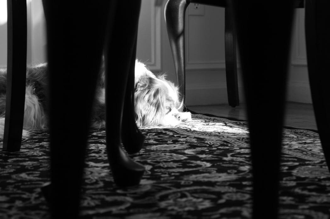 Janet Leydon - Pet Photography - student project