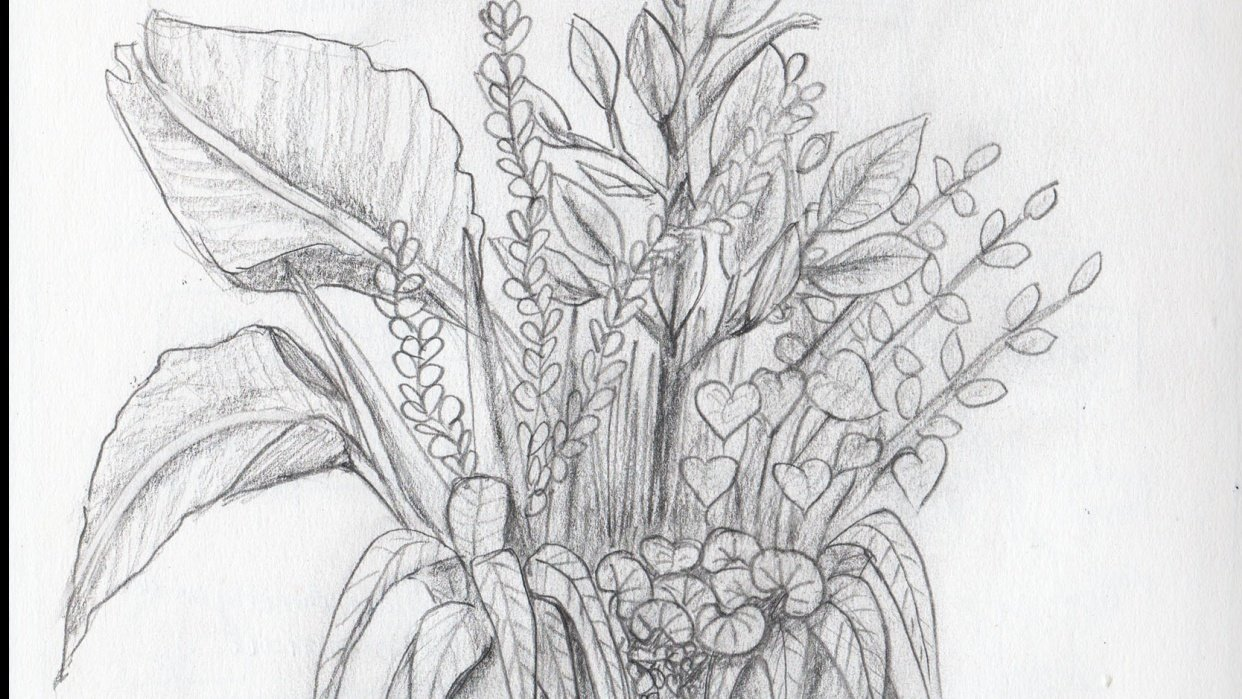 Drawing plants and leaves - student project